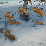 Winter Beech study