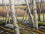 Afternoon Light, Birch Grove