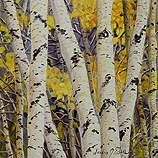 Autumn Birch Study